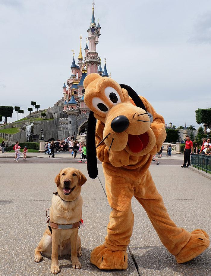 Focus Sur Les Chiens D Assistance A Disneyland Paris Disneylandparis News